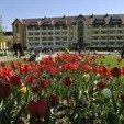 фото Санаторий Сузирье Свалява.Тюльпаны