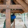 фото Отель Золотая гора  Ужгород.Мини-зоопарк