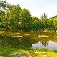 фото Санаторий Карпаты Чинадиево Закарпатье. Озеро
