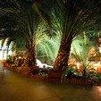 фото санаторий южный трускавец. пальмы