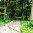 фото трускавец санаторий хрустальный дворец. дорожки в лесу